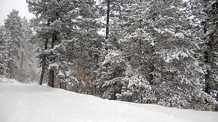 Cloudcroft Snow - December 5, 2011