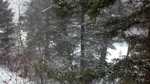 Cloudcroft New Mexico Snow -- 3-9-2012