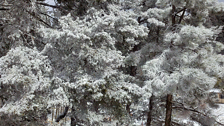 Cloudcroft Ice Trees